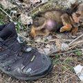 Goran pronašao napuštenog psića u cipeli pokraj smeća i spasio mu život